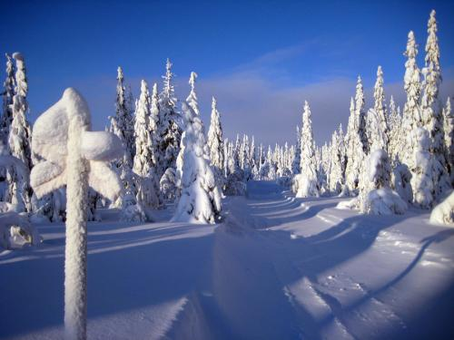Escape to Lapland this Winter!