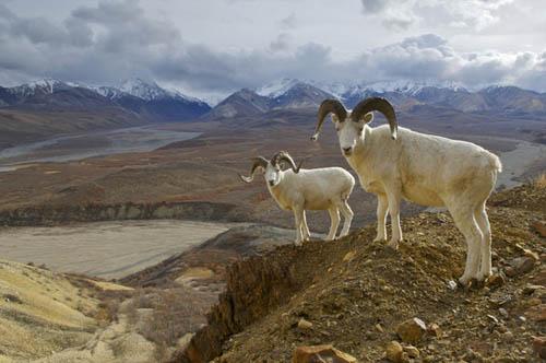 Five Wildlife Wonders of Alaska