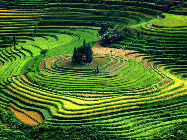 Interesting Terraces to Visit