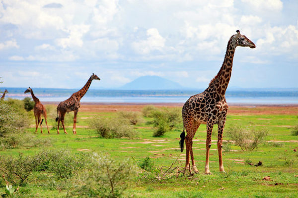 Best Attractions in Tanzania