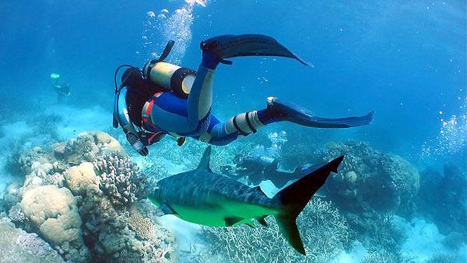 scuba-shark